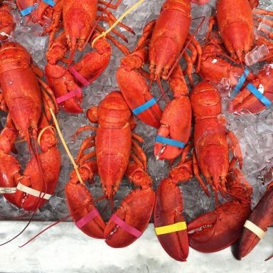 Lobsters for sale outside of Woodman's in Essex, MA.