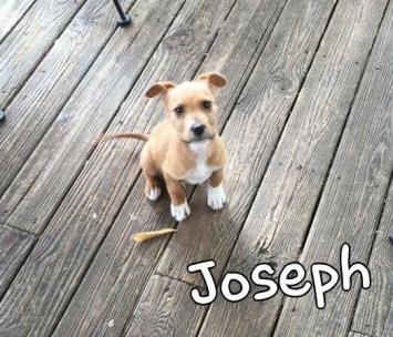 Fritz's puppy photo