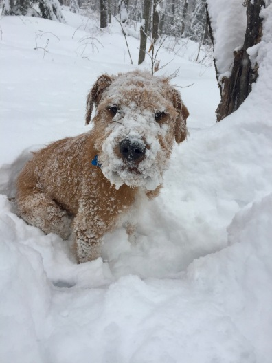 The abominable snow fritz.