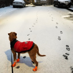 Snow walks with Fritz.