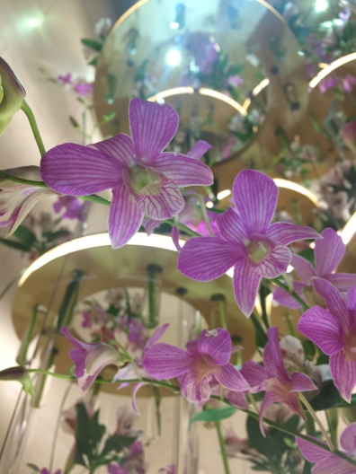 Thousands of fresh orchids at the Four Seasons