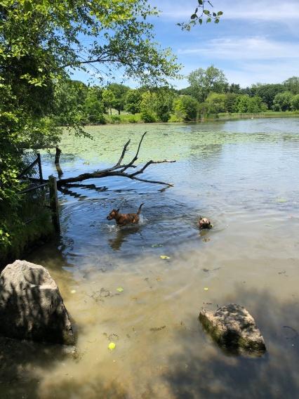 Fresh Pond Swim Spot